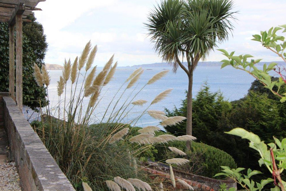 pampas-grass-in-the-gardens